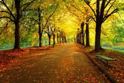 Fototapeta Jesień w parku miejskim. Kolorowe liście w światło słońca. Puste ławki w pobliżu drzewa. Piękno przyrody scena na jesieni