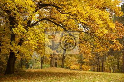 Fototapeta Jesień / Złote Drzewa w parku
