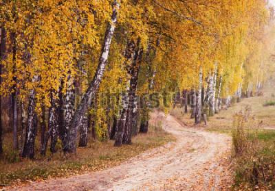 Fototapeta Jesieni lasowa droga między brzoz drzewami