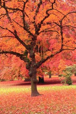 Fototapeta Jesienią drzewa w parku
