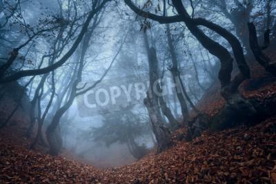 Fototapeta Jesienią lasów na Krymie