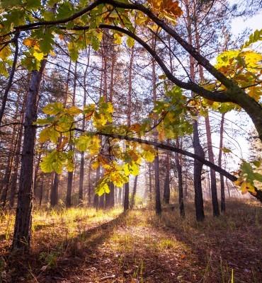 Fototapeta Jesienią lasu