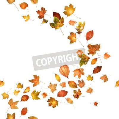 Fototapeta jesienią liści krzywą Breeze z Physalis Pączek, powtarzalny, studio sfotografowany z tyłu blask i samodzielnie na białym absolutna