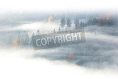 Fototapeta Jesienią sezonu, dzikiego lasu w sunrise mgła mgła i chmur