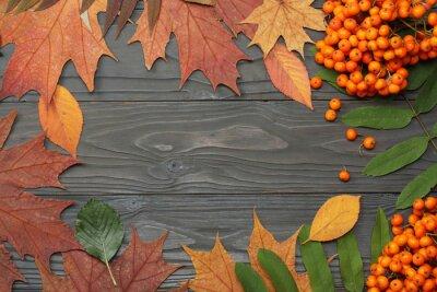 Fototapeta Jesienią tła z kolorowych liści i rowan na pokładzie drewniane. Widok z góry z miejsca na kopię