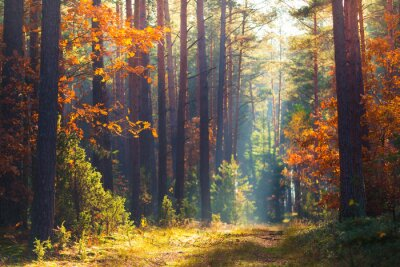 Fototapeta Jesienna scena leśna
