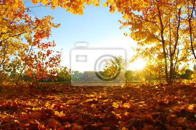 Jesienne drzewa na słońcu