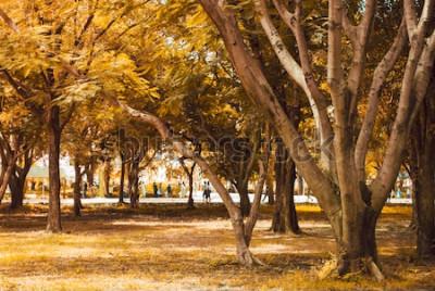 Fototapeta Jesienne krajobrazy leśne z promieniami ciepłego światła rozświetlającymi złote liście i ścieżką prowadzącą do sceny