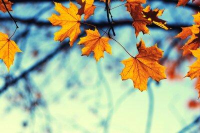 Fototapeta jesienne liście na niebie