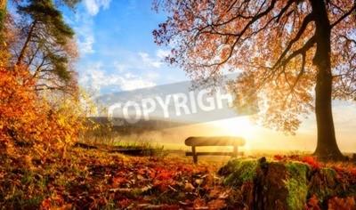 Fototapeta Jesienny krajobraz z słońce ciepło oświetla ławce pod drzewem, dużo złota liści i błękitne niebo