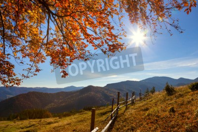 Fototapeta Jesienny krajobraz - żółte liście nad górami dolinie, błękitne niebo i słońce rzeczywistym - piękny dzień jesieni sezonu