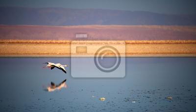 Jezioro Flamingo, pustynia Atacama w Chile