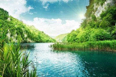 Fototapeta jezioro w głębokim lesie