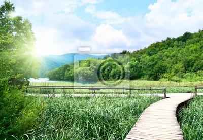 jezioro w głębokim lesie i sposób drewna