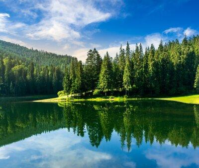 Fototapeta jezioro w pobliżu sosnowego lasu, w góry o wschodzie słońca