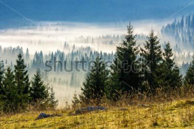 Fototapeta jodły na łące w dół do iglastego lasu w mgliste góry Rumunii
