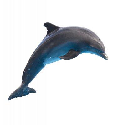 Fototapeta jumping dolphin on white