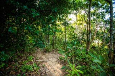 Fototapeta Jungle Trekking w Ko Phangan