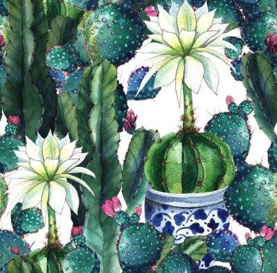 Fototapeta Kaktus.