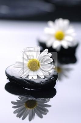 kamienie terapii z kwiatów daisy