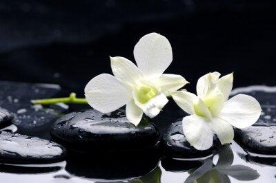 kamienie terapii z orchidei