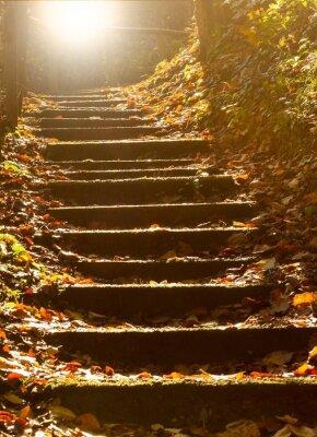 Fototapeta Kamiennych schodach w mistycznym lesie