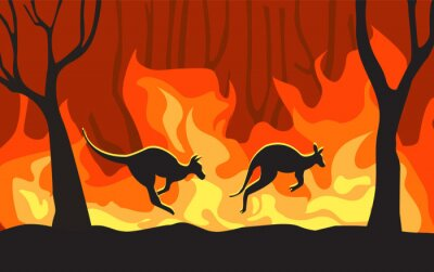 Fototapeta Kangaroos run from forest fires in Australia. vector illustration flat design. Concept of natural disaster. The animal is dying in the blazing forest fire.