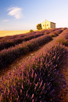 Fototapeta kaplica z lawendowego pola, Plateau de Valensole, Provence, Fran