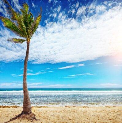 Fototapeta Karaibskiej plaży i tropikalnych Morza na Haiti