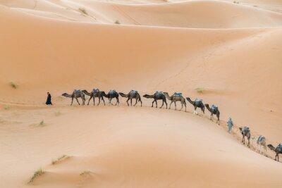 Fototapeta Karawana na pustyni.