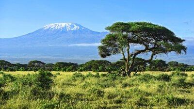Fototapeta Kilimandżaro