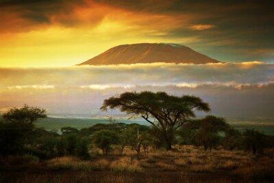 Fototapeta Kilimandżaro. Savanna w Amboseli, Kenia