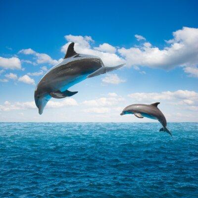 Fototapeta Kilka skaczących delfinów