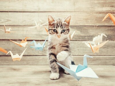 Fototapeta Kitten gry z kolorowych papierowych żurawi ptaków