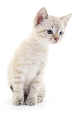 Fototapeta Kitten na białym tle