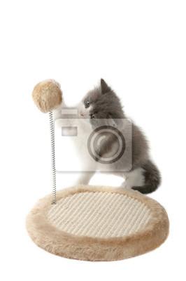 Kitten to ostrzenia pazurów