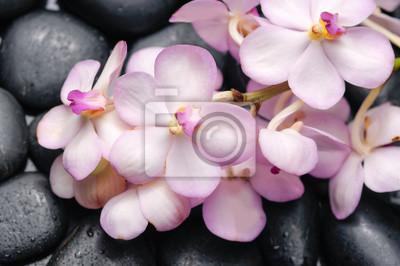 Kłamać na gałęziastej orchidei na czerni dryluje odbicie