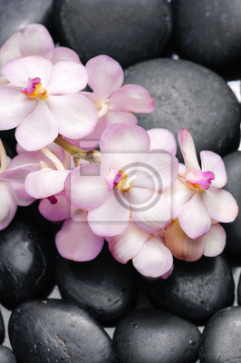 Kłamać na gałęziastej orchidei na stosie czarni kamienie