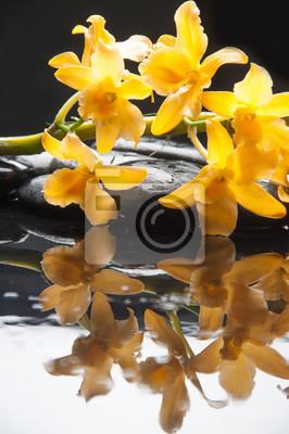 Kłamać na kolor żółty gałęziastej orchidei na czerni dryluje odbicie