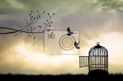 Fototapeta Klatka dla ptaków o zachodzie słońca