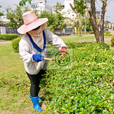 Kobieta cięcia krzewów strzyżenia