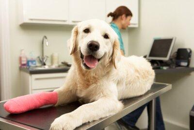Fototapeta Kobieta Lekarz Weterynarii Leczenie Dog In Surgery