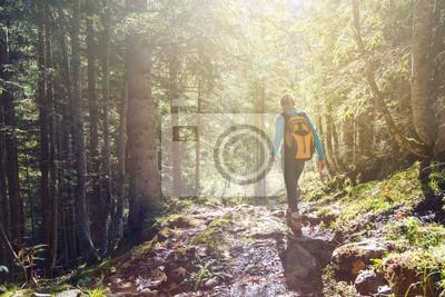 Fototapeta Kobieta piesze wycieczki w lesie