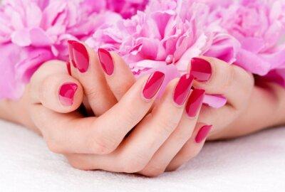 Fototapeta Kobieta przyłożył dłonie z manicure gospodarstwa różowy kwiat