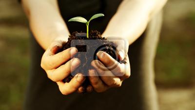 Fototapeta Kobieta strony gospodarstwa młodych roślin