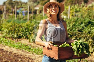Fototapeta Kobieta zbiera świeże warzywa z jej gospodarstwa