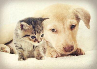 Fototapeta kociak i szczeniak