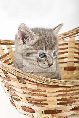 Fototapeta Kocięta w koszyku