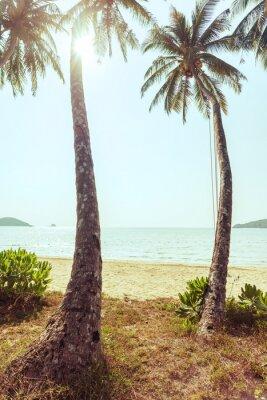 Fototapeta Kokosowe drzewo na plaży z rocznika stonowanych