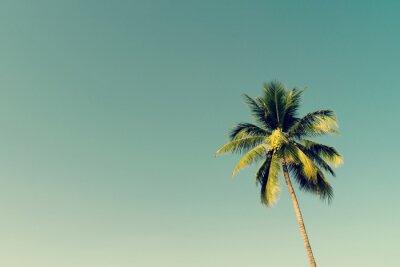 Fototapeta Kokosowe palmy i świeci słońce z rocznika efekt.